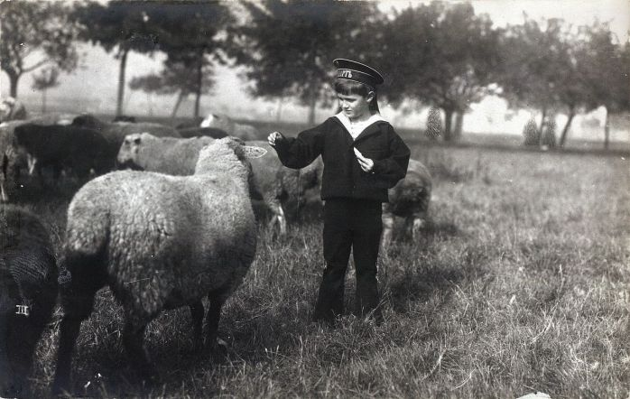 Alexei_Nikolaevich_playing_with_sheep