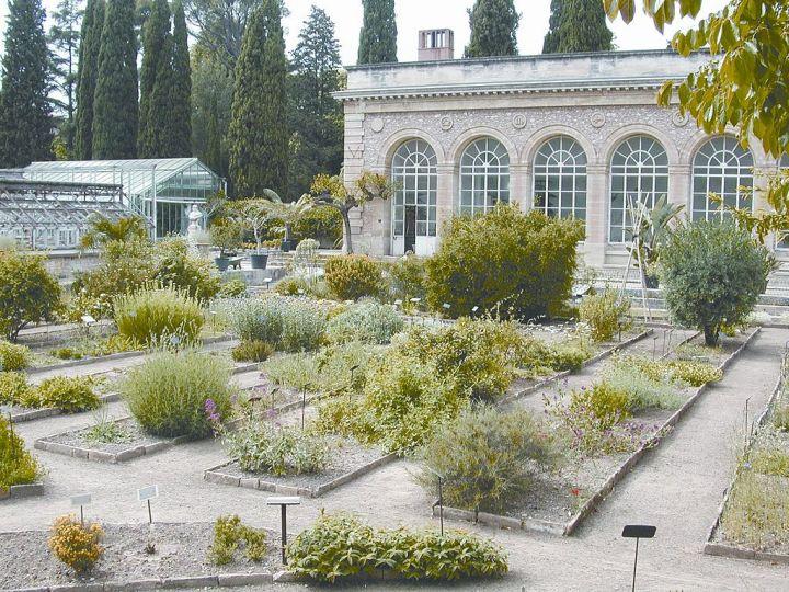 1024px-Montpellier_jardin_plantes3