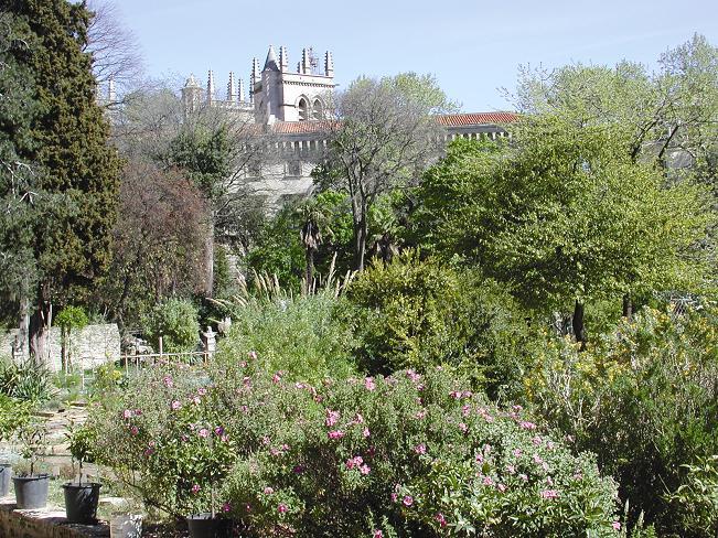 Montpellier_jardin_plantes1